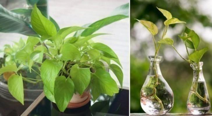 Secondo la NASA, questa pianta non dovrebbe mai mancare in un appartamento: ecco perché