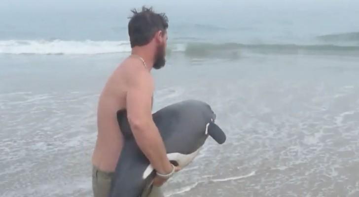 Deze fascinerende redding van een prachtige jonge dolfijn mag je niet missen!