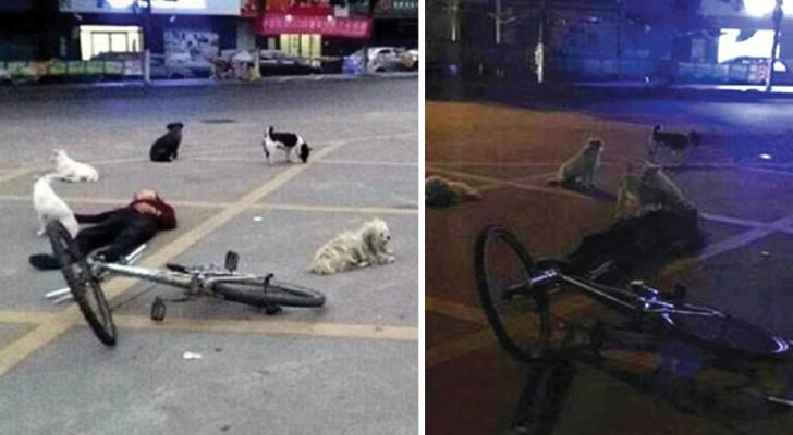 8 cani vegliano una notte intera sul corpo della donna che si è presa cura di loro