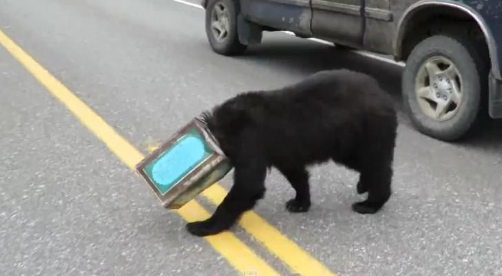 Er lief durch die Straßen mit dem Kopf in einer Blechdose gefangen: Seine Rettung wird euch Freude bereiten