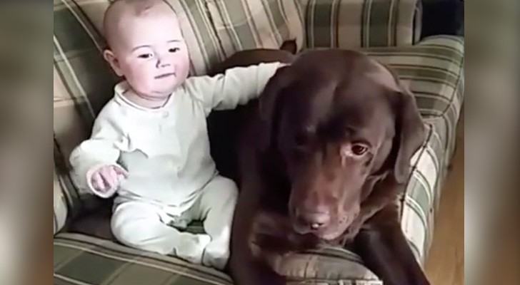 Here's why EVERY child should grow up with a dog . . . Magnificent!