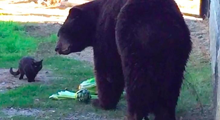 Eine Katze schlüpft durch den Zaun eines Bärenkäfigs: Seine Reaktion lässt die Besucher staunen