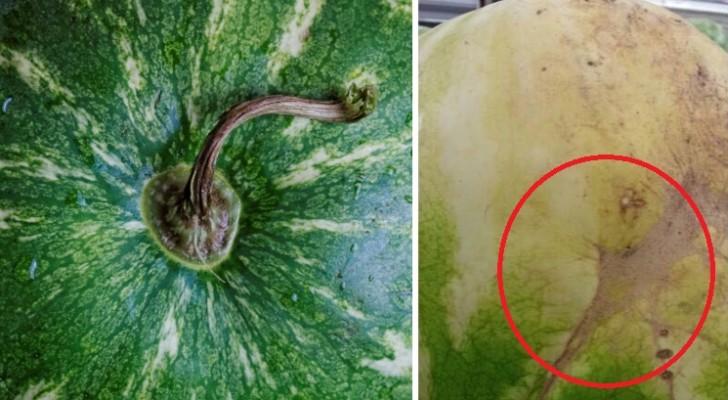 A escolha da melhor melancia: veja cinco truques para nunca errar!