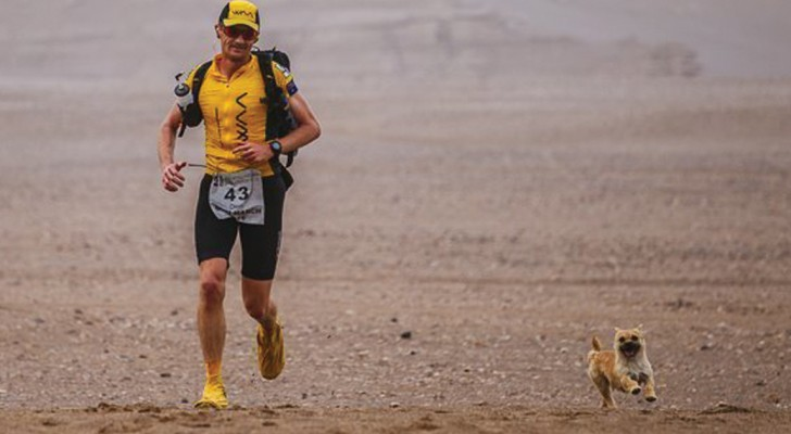 A marathon runner and a stray dog win --- Together!