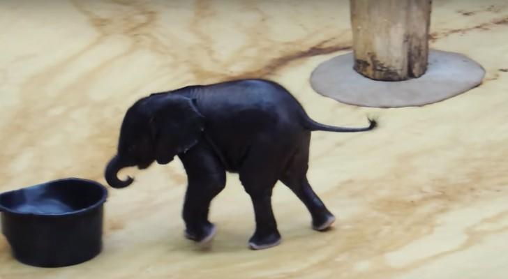 Um elefantinho vê uma bacia cheia de água: as suas brincadeiras são muito fofas!