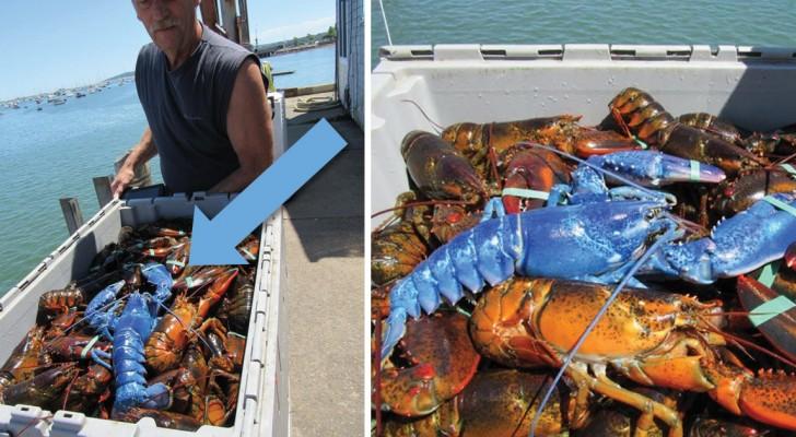 Un pêcheur retire ses filets et trouve à l'intérieur un spécimen unique et rare