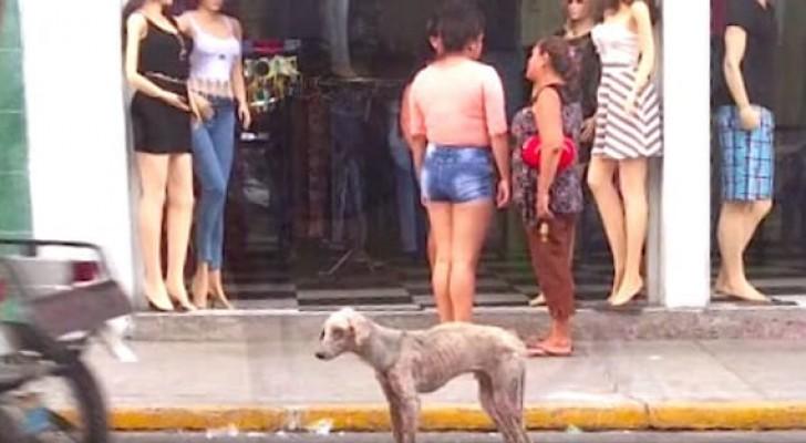 Este cão faminto era ignorado por todos, mas alguém decidiu prestar atenção nele...