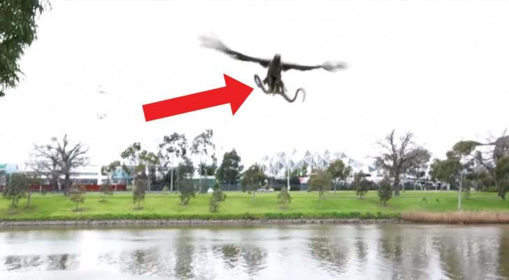 Er filmt einen Greifvogel der eine Schlange fängt, aber dann passiert etwas unglaubliches