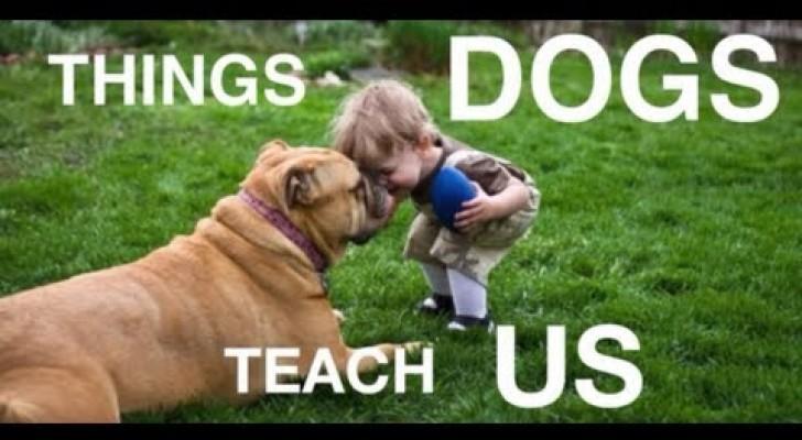 Was uns unsere besten Freunde beibringen können