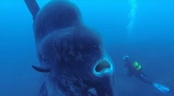 Se sumerge para explorar los fondos y se encuentran con un pez GIGANTEZCO...que espectaculo!