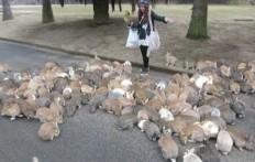 Ragazza Vs Conigli Selvatici