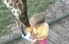 Bambini allo zoo compilation