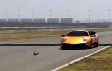 Corri piccolo scoiattolo CORRI!