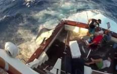 Un pesce da 300kg salta sulla barca