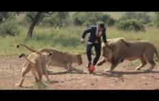 Una partita con i leoni