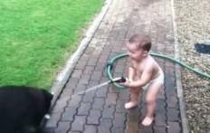 Stupendi Giochi d'Acqua tra un Bambino e i suoi Labrador
