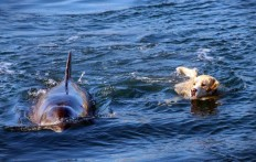 Ein Delfin badet oft in diesem kleinem Hafen- und das aus einem ganz besonderen Grund!