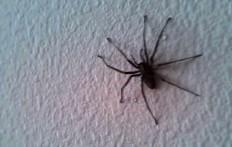 Vede un enorme ragno sul muro del salotto, ma aspettate di vedere l'intera stanza.
