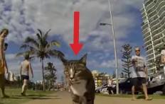 Il modo in cui questo gatto gira per la città lascia i passanti a bocca aperta