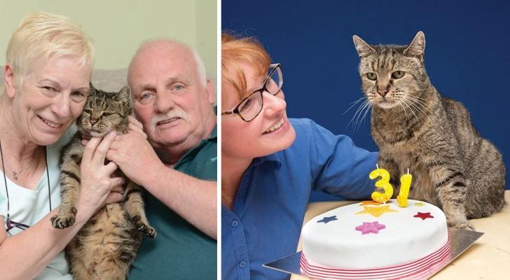31 bougies pour lui: voici Nutmeg, le chat le plus vieux du monde