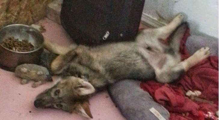 Il adopte un chiot abandonné, mais il va découvrir que ce n'est PAS un chien normal ...
