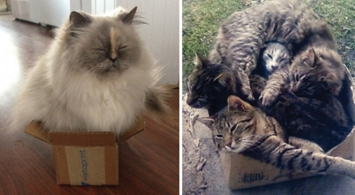 Pourquoi les chats aiment tant se mettre dans les boîtes?