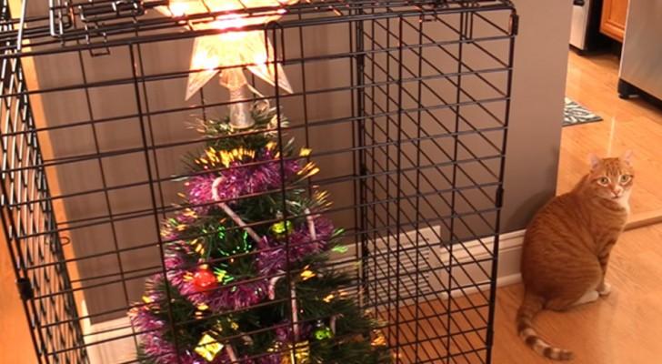 Noël avec un animal à la maison : les solutions les plus ingénieuses pour sauver votre arbre