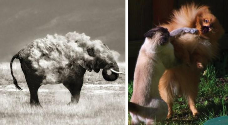 20 photos « banales » devenues des petits chefs-d'œuvre grâce à un parfait timing