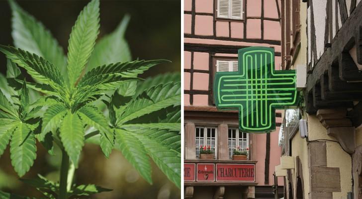 La cannabis arriva nelle farmacie italiane: ecco chi può usarla e come fare per ottenerla