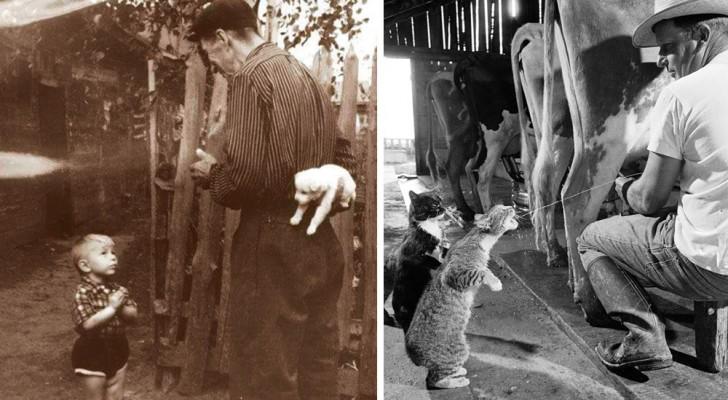 10 foto storiche dolcissime che possono davvero cambiarti la giornata
