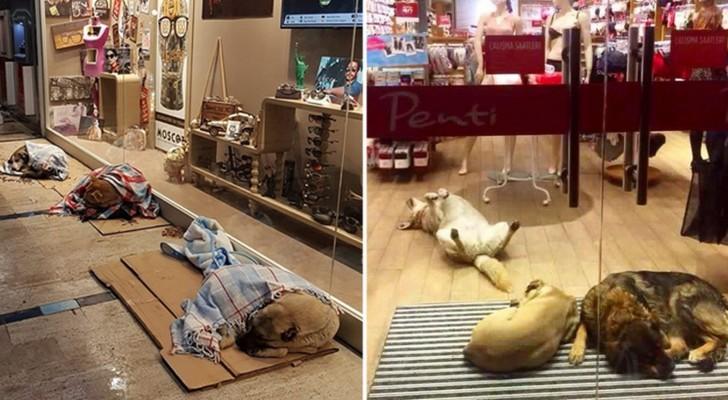 Gelo improvviso: le persone stanno compiendo gesti dolcissimi anche per gli animali