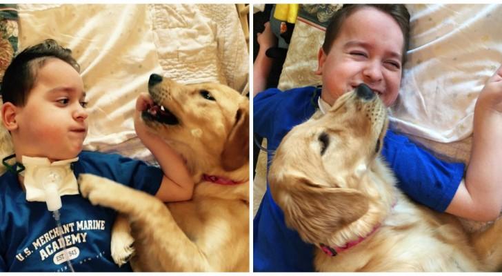 Een jongetje met quadriplegie en een hond hebben een ongelofelijke band met elkaar