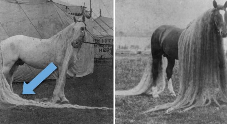Le cheval des merveilles : l'incroyable race existante au 19e siècle, célèbre pour sa crinière TRÈS longue
