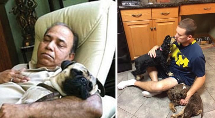 Ces papas ne voulaient absolument PAS de chien à la maison. Et puis, les enfants les ont retrouvés comme ça