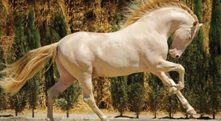 21 maestosi cavalli davanti ai quali non si può che rimanere incantati