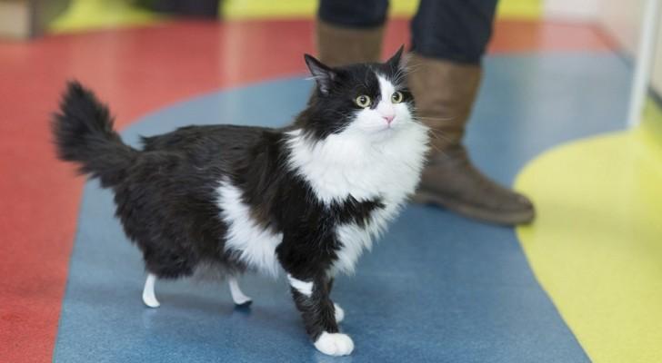 È arrivato in clinica senza zampe posteriori: guardatelo ora camminare grazie alle protesi bioniche
