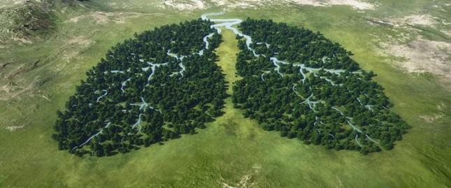 Norwegen ist das erste Land der Welt das keine Produkte mehr kauft, die die Wälder zerstören