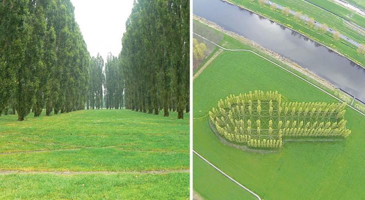 Een reeks bomen vormen samen een gebouw: als je 't van bovenaf bekijkt dan weet je wat het is