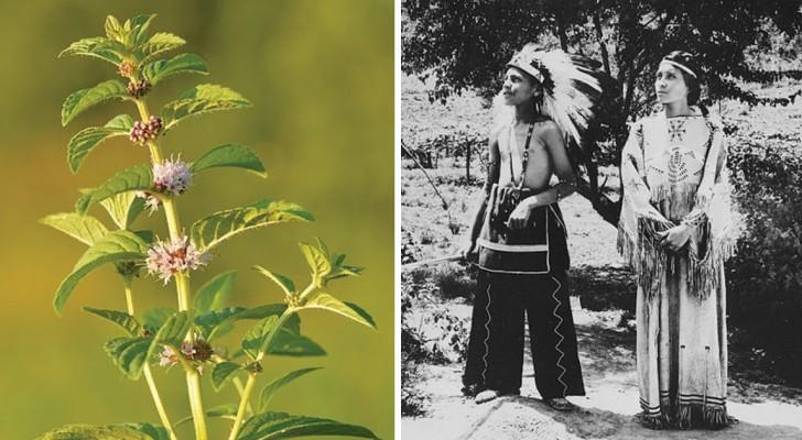 I nativi americani conoscevano bene l'uso delle piante: ecco a quali ricorrevano per curarsi