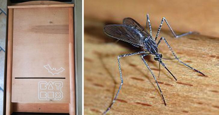 Cerchi il rimedio più naturale contro le zanzare? Ecco come