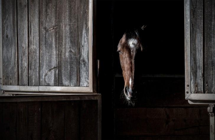Così l'industria farmaceutica si arricchisce torturando i cavalli