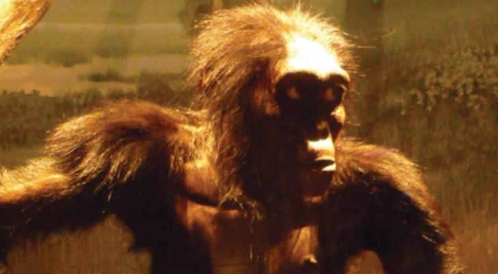 L'ancêtre de l'homme pourrait ne pas être africain: découverts de nouveaux fossiles en Europe