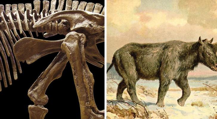 Oubliez les arcs-en-ciel et la crinière: voici comment était la dernière licorne sibérienne qui a vécu sur terre