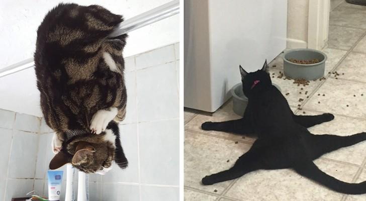 28 unglaubliche Fotos von absurden Katzenaktionen, die uns alle belustigen