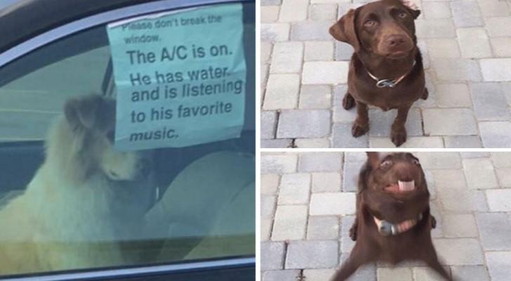 30 leuke tweets over honden die gewoon heel herkenbaar zijn