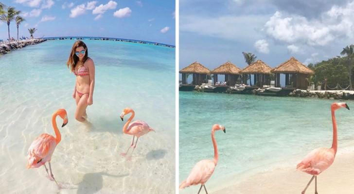 Diepblauwe zee en een toefje roze: ontdek het strand waar je kunt zwemmen met flamingo's