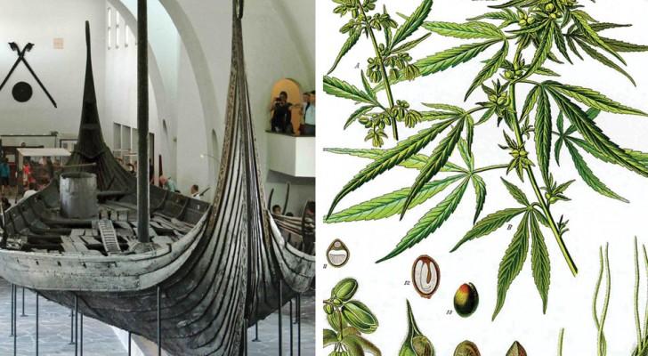 Er wordt een zak met cannabis gevonden naast het skelet van een viking-vrouw. Wat deed ze ermee?