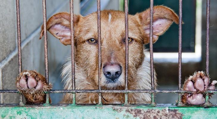 Legge shock in Spagna: multa fino a 5000 euro per chi SALVA un animale abbandonato