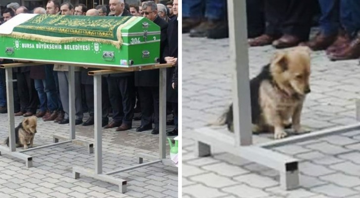 Questo cane non si rassegna alla morte del padrone: al funerale lo hanno trovato ai piedi del feretro
