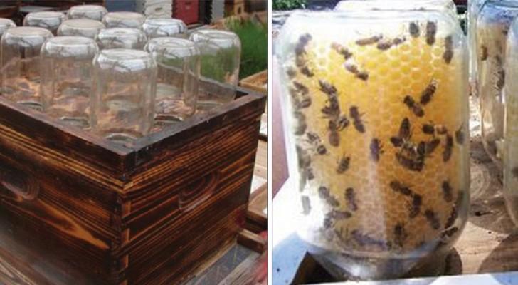 Cet homme a trouvé une solution pour sauver les abeilles et pour produire du miel (et tout le monde adore).